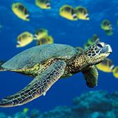 summer-camp-turtle